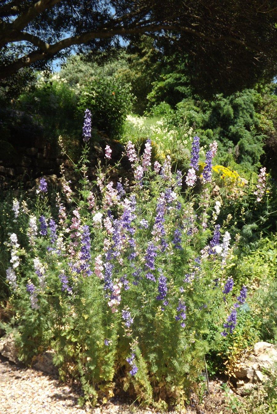 jardin alpin fleurs belues et mauves