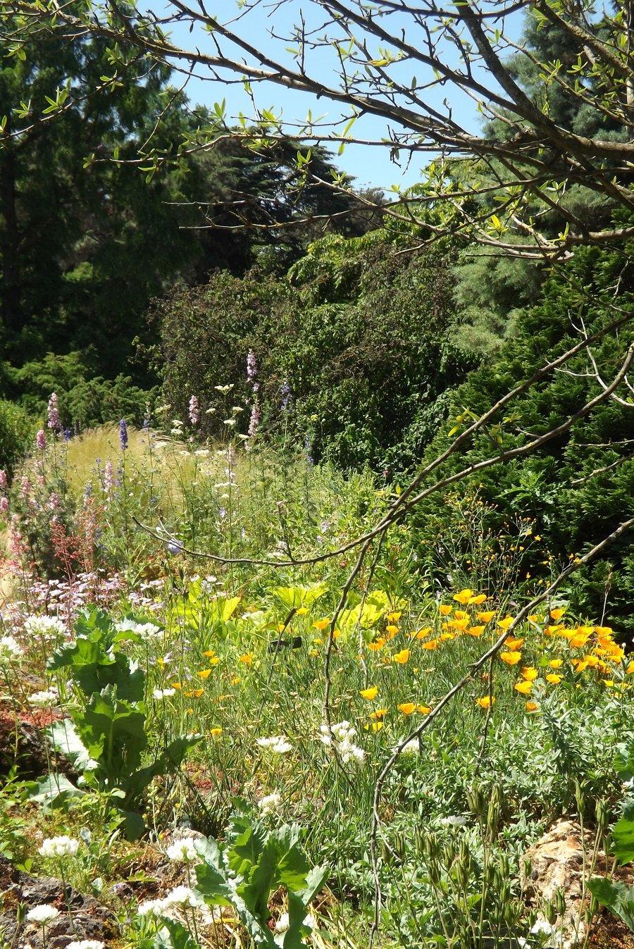 jardin alpin prairie 2