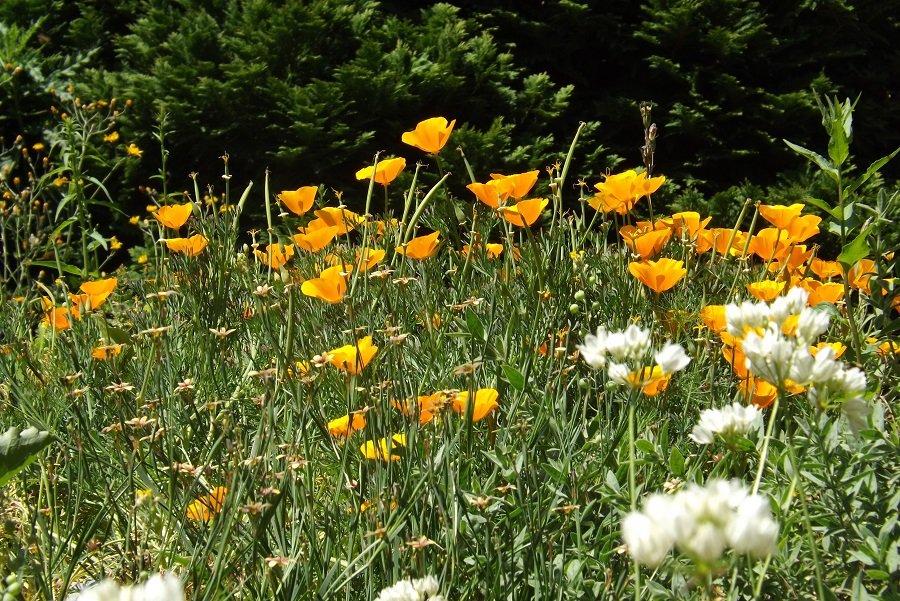 jardin alpin prairie