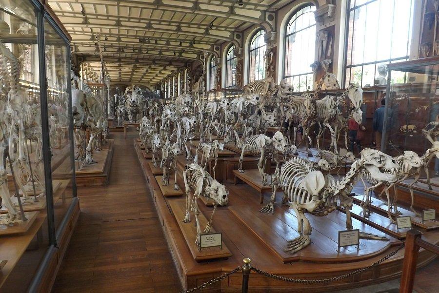 paléo animaux suquelettes