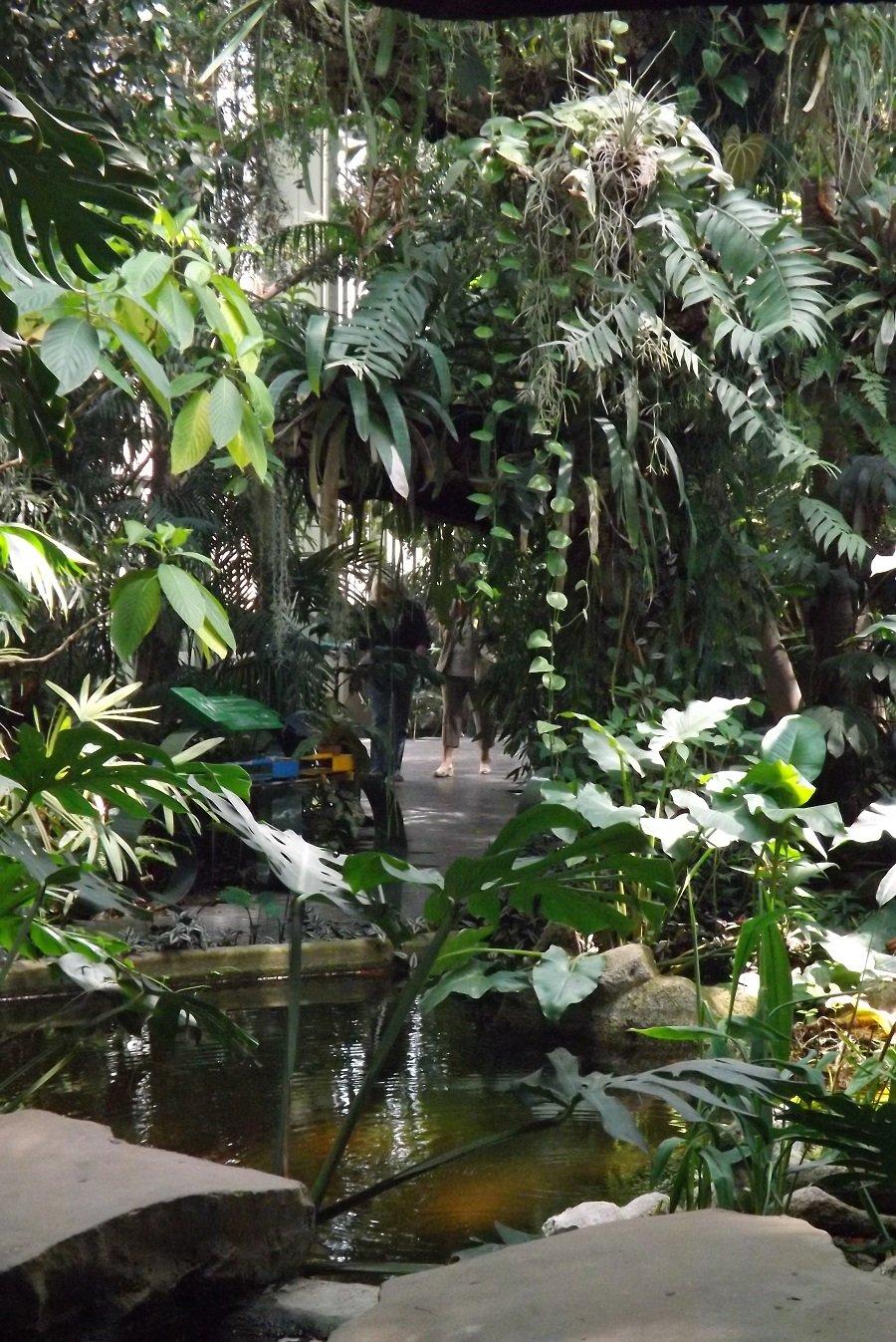 serre tropicale 1