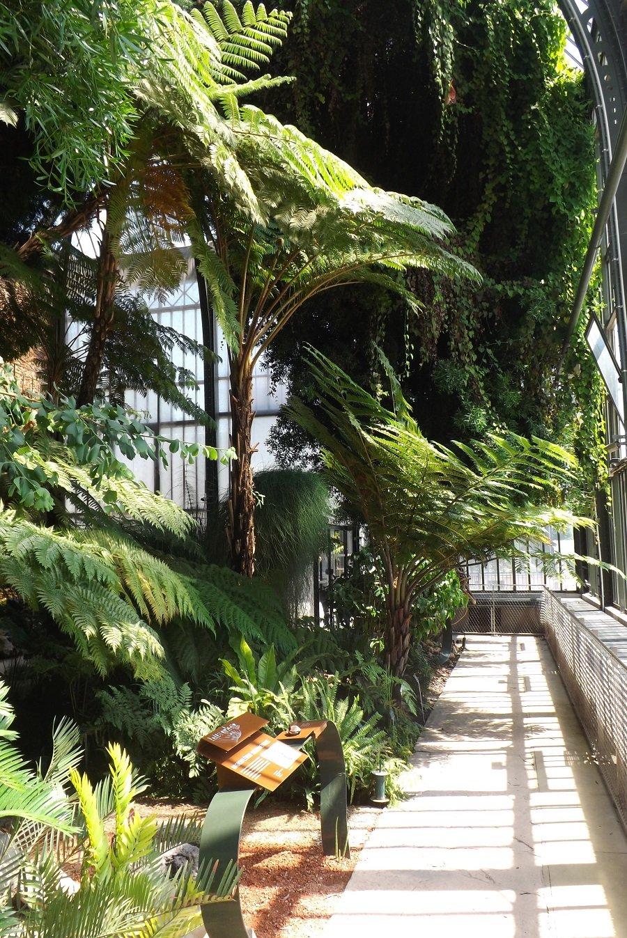 serre tropicale 4